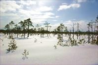 Рдейское болото в начале марта