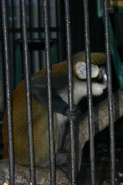 в Калининградском зоопарке