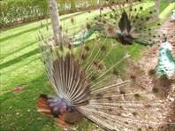 Птичий сад. Исфахан