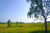 Луг вблизи н.п.Осовик