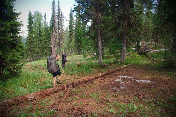 Вошли в зону леса, пока без травы