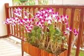 018-Орхидеи