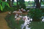 019-Фламинго