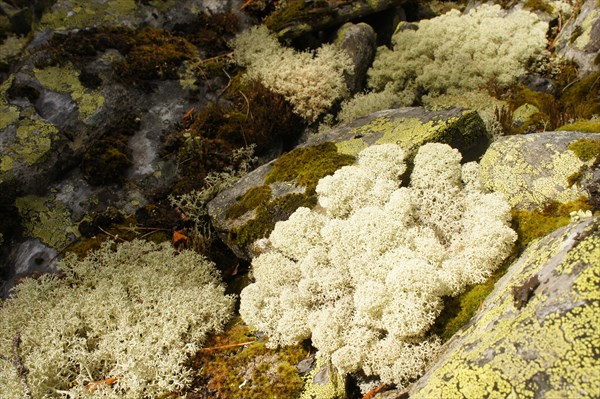 Коралловый риф.