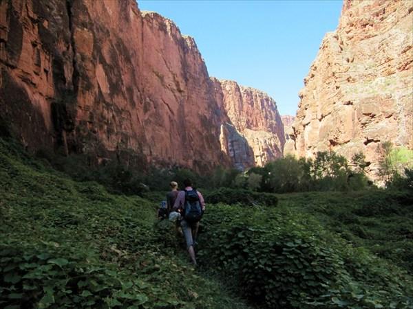 Гранд каньон, идем сквозь дикий виноградник