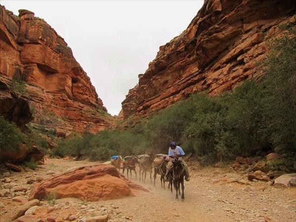 Лошади перевозят багаж
