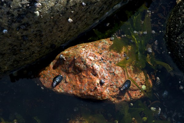Баренцево море отлив 3