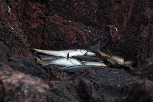 Морской улов 1