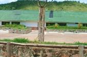 Местная школа