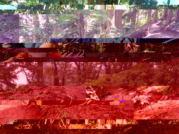 Серпантин в лесу на спуске с пер. Баки