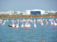 Кипр-2011
