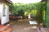 виноградник во дворе
