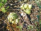 Интересное растение на скалах