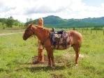 местное развлечение - конные прогулки
