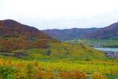 Вид на виноградники и город Spitz