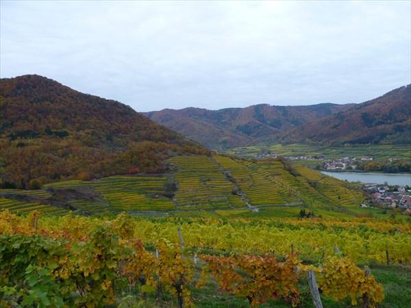 на фото: Вид на виноградники и город Spitz