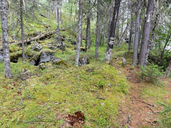 Четкая тропа по лесу.