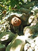 Раздвигая камни