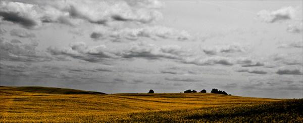 Рапсовое поле. Германия