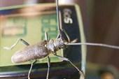 Любознательный жук