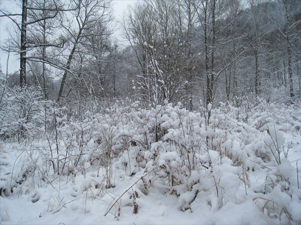 Зимний лес весной