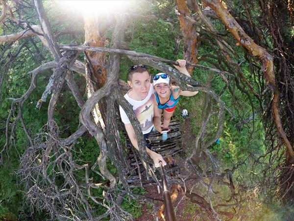 Мы на дереве