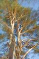 Шилин на дереве 2