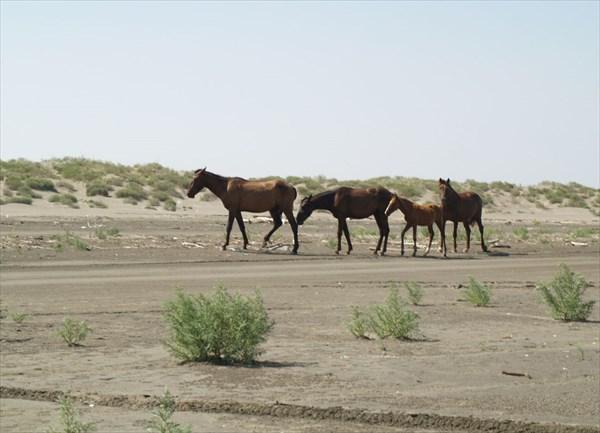 Там же.  Лошади на свободном выпасе.