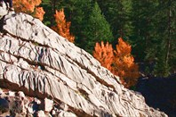 Осенний турецкий лес