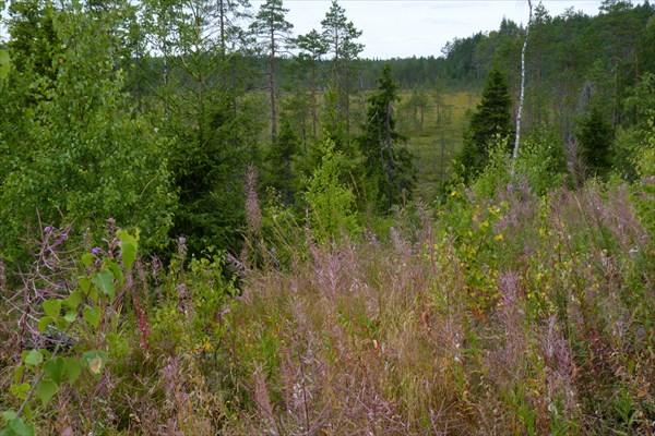 Типичный пейзаж к западу