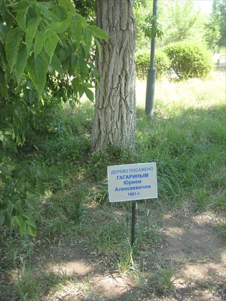 Дерево Гагарина