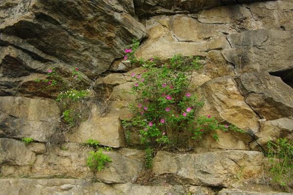 Цветы на камнях