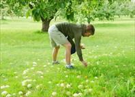 Яблочко от яблони недалеко падает