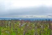 Дождливая панорама...