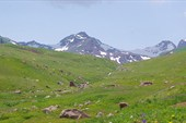 Среди альпийских лугов (на пер.Кырк-Кыз)