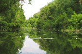 Картина: река и кувшинки