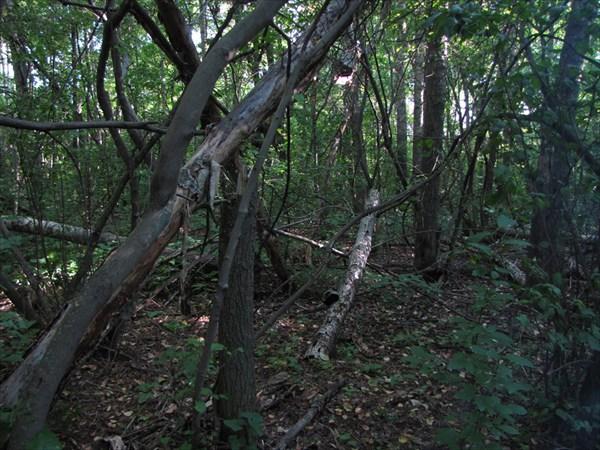 Трухлявый лес