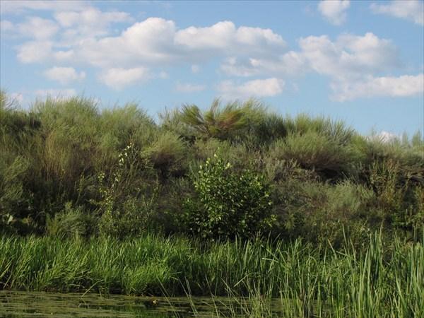 Косматая трава