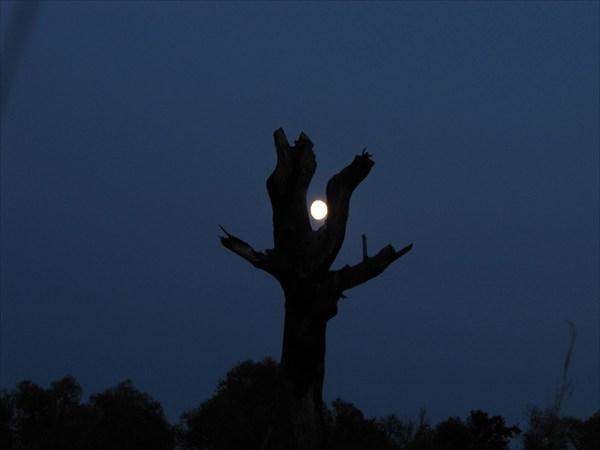 Вечер, дерево, луна