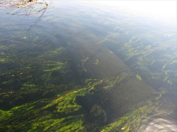 Подводное бревно