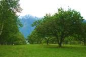 Райские места. Кордон Беле. Заросли яблонь.