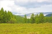 Вид на кряж Зверева от Алдана.