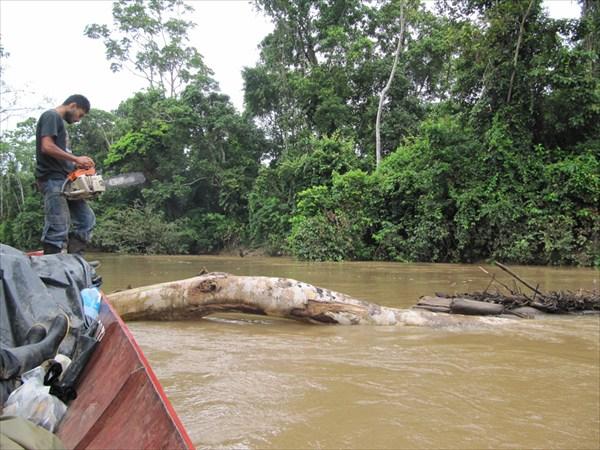 бревно перекрыло  реку