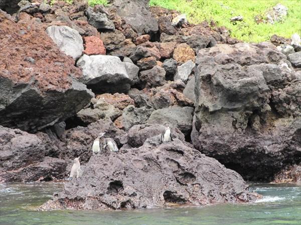 пингвины на островке