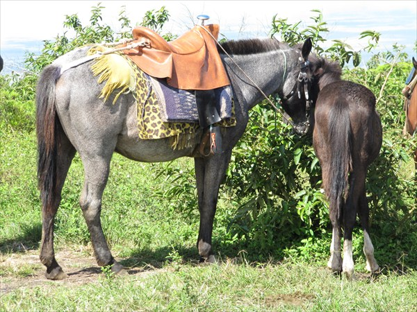 моя лошадка с жеребенком