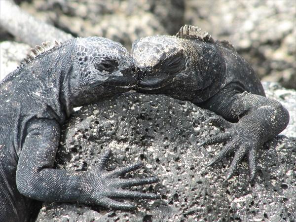 Игуаны очнь нежные создания:) Они часто греются на солнце парами