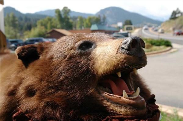 Он привлёк меня медвежьей шкурой,висевшей на периле