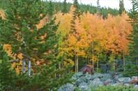Осень наступает по всем фронтам