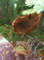 И тут,ура!!! вижу поваленный ствол дерева