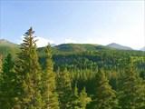 Куда ни кинь взгляд,-холмы поросшие густым лесом